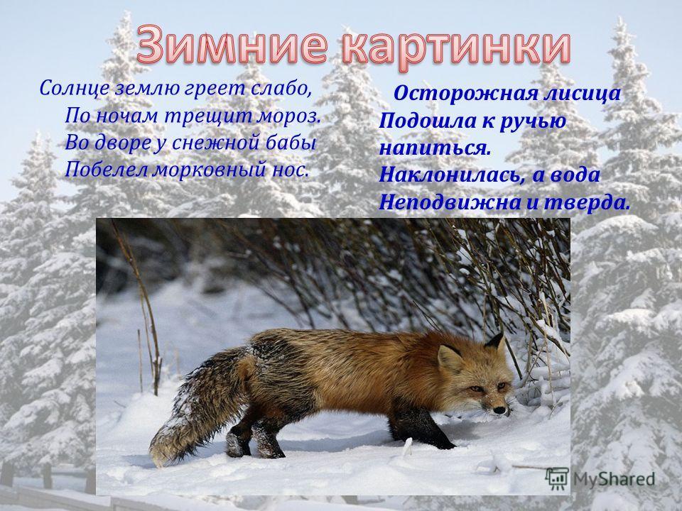 Солнце землю греет слабо, По ночам трещит мороз. Во дворе у снежной бабы Побелел морковный нос. Осторожная лисица Подошла к ручью напиться. Наклонилась, а вода Неподвижна и тверда.