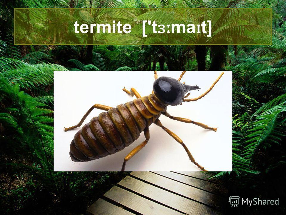 ant [ænt]