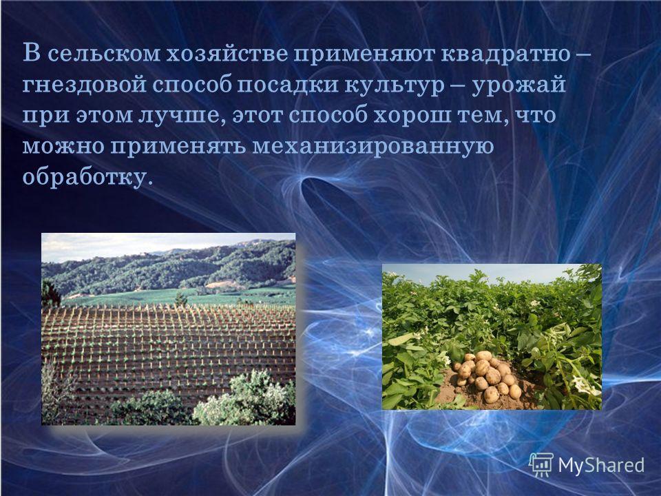 В сельском хозяйстве применяют квадратно – гнездовой способ посадки культур – урожай при этом лучше, этот способ хорош тем, что можно применять механизированную обработку.