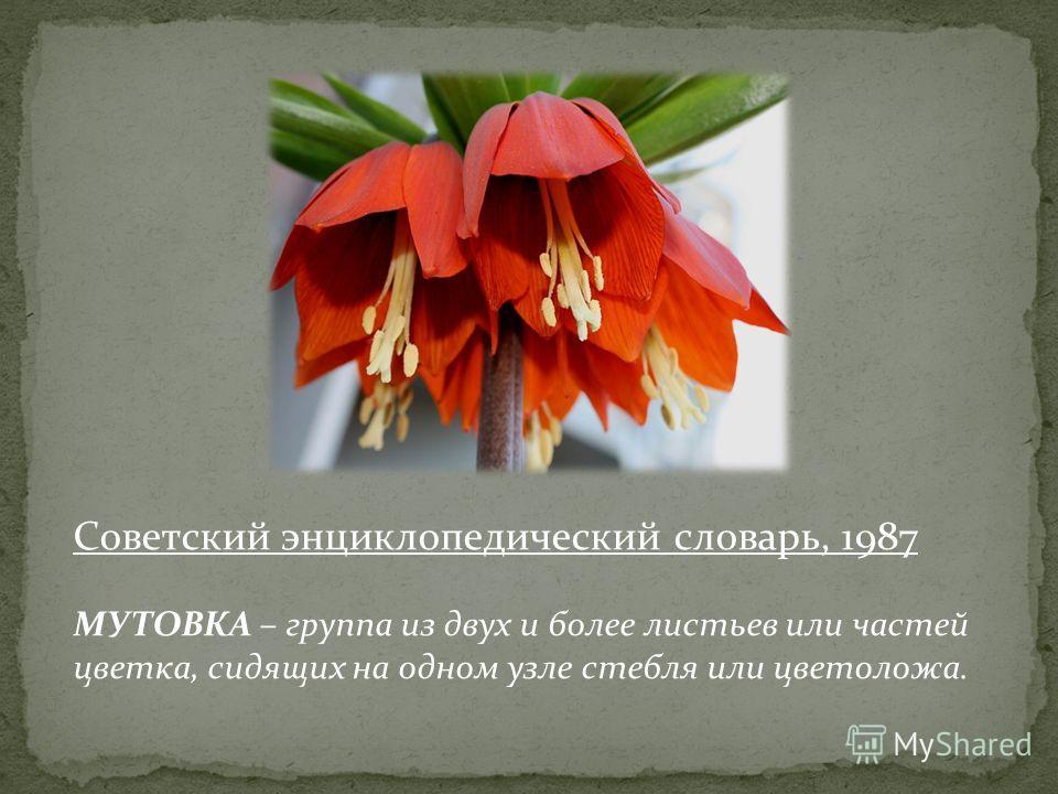 Советский энциклопедический словарь, 1987 МУТОВКА – группа из двух и более листьев или частей цветка, сидящих на одном узле стебля или цветоложа.