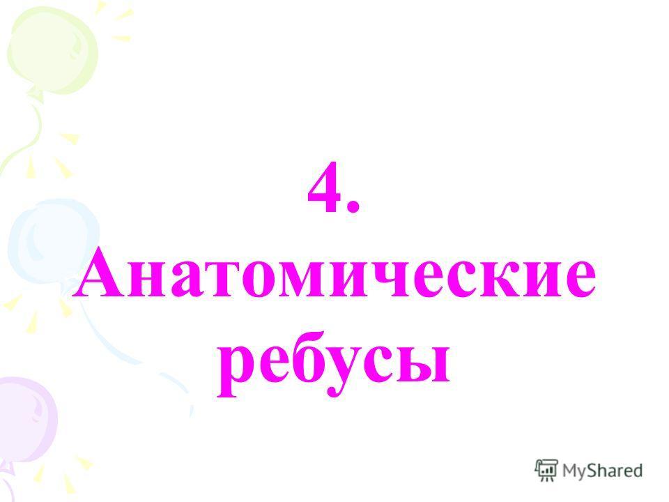 4. Анатомические ребусы
