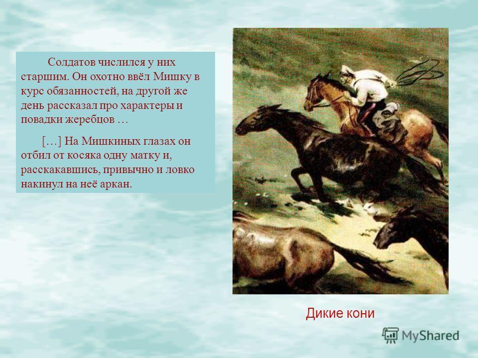 Дикие кони Солдатов числился у них старшим. Он охотно ввёл Мишку в курс обязанностей, на другой же день рассказал про характеры и повадки жеребцов … […] На Мишкиных глазах он отбил от косяка одну матку и, расскакавшись, привычно и ловко накинул на не