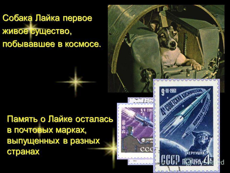 Собака Лайка первое живое существо, побывавшее в космосе. Память о Лайке осталась в почтовых марках, выпущенных в разных странах