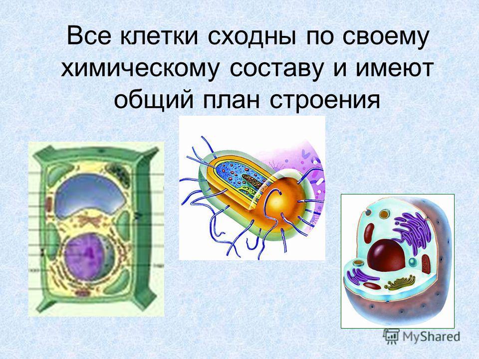 Все клетки сходны по своему химическому составу и имеют общий план строения