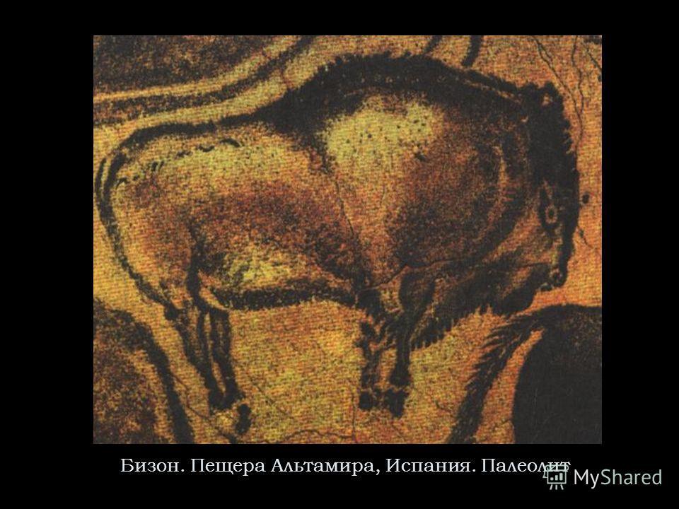 Бизон. Пещера Альтамира, Испания. Палеолит