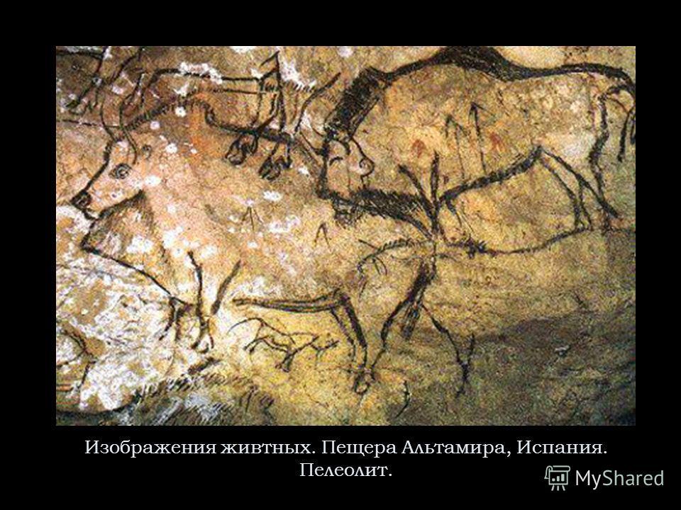Изображения живтных. Пещера Альтамира, Испания. Пелеолит.