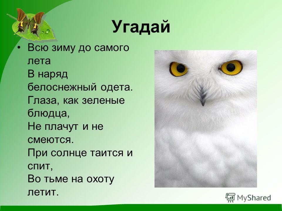 Угадай Всю зиму до самого лета В наряд белоснежный одета. Глаза, как зеленые блюдца, Не плачут и не смеются. При солнце таится и спит, Во тьме на охоту летит.