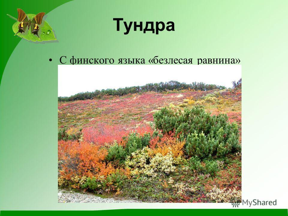 Тундра С финского языка «безлесая равнина»