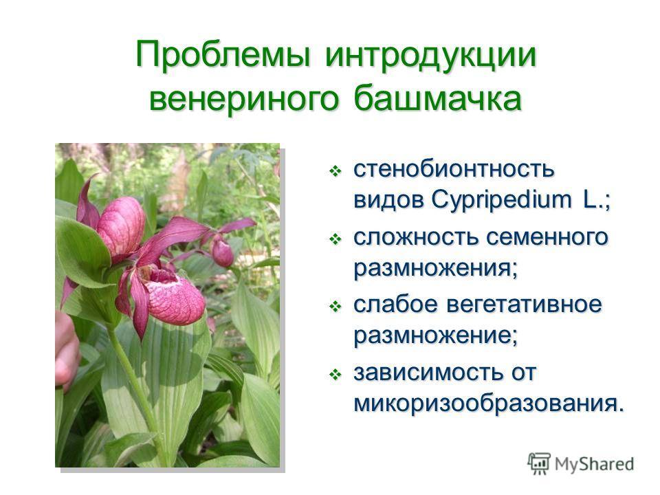 стенобионтность видов Cypripedium L.; стенобионтность видов Cypripedium L.; сложность семенного размножения; сложность семенного размножения; слабое вегетативное размножение; слабое вегетативное размножение; зависимость от микоризообразования. зависи