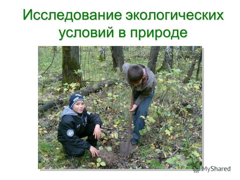 Исследование экологических условий в природе