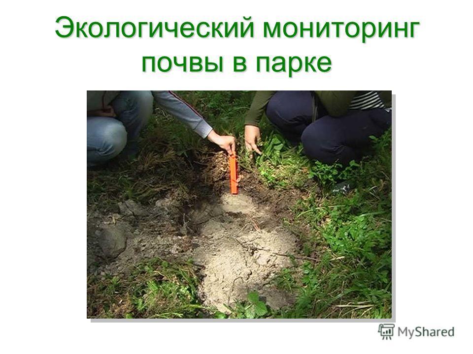 Экологический мониторинг почвы в парке