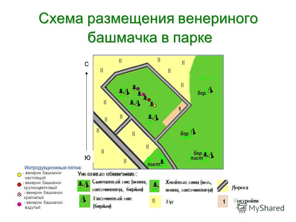 Схема размещения венериного башмачка в парке с ю Интродукционные пятна: - - венерин башмачок настоящий - венерин башмачок крупноцветковый - венерин башмачок крапчатый - венерин башмачок вздутый