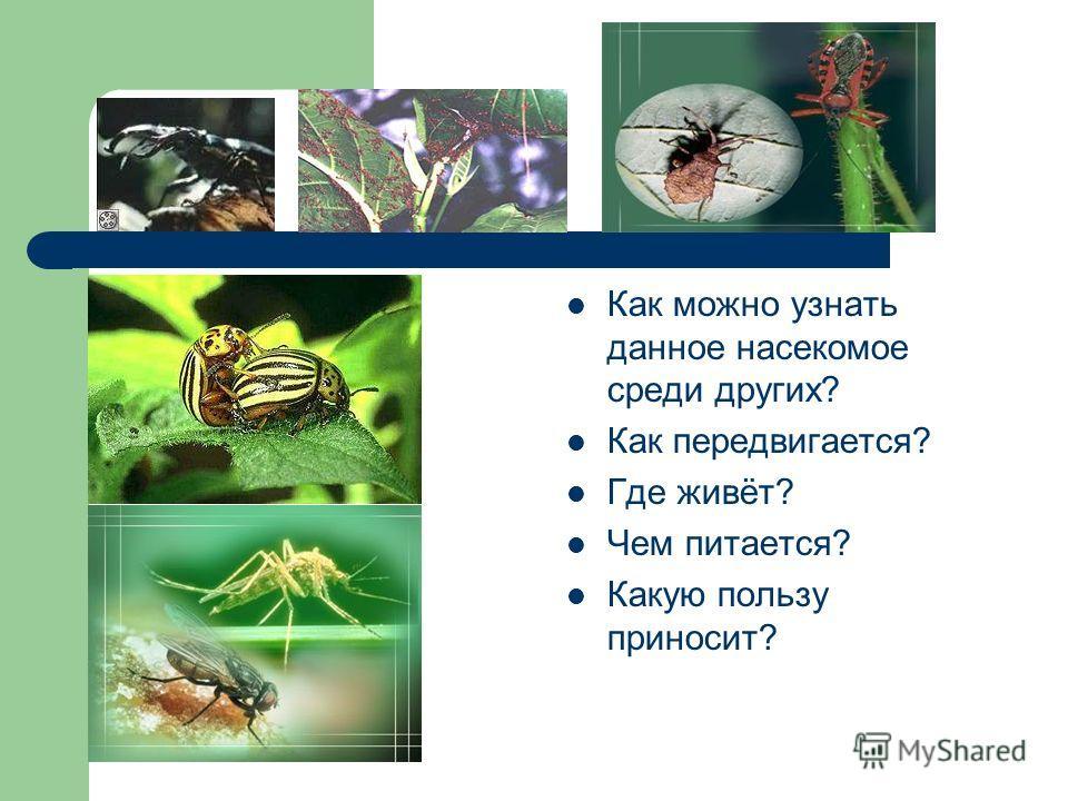 Как можно узнать данное насекомое среди других? Как передвигается? Где живёт? Чем питается? Какую пользу приносит?
