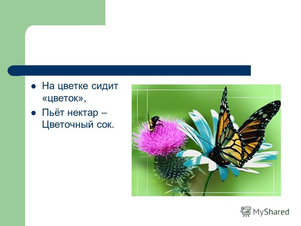 На цветке сидит «цветок», Пьёт нектар – Цветочный сок.