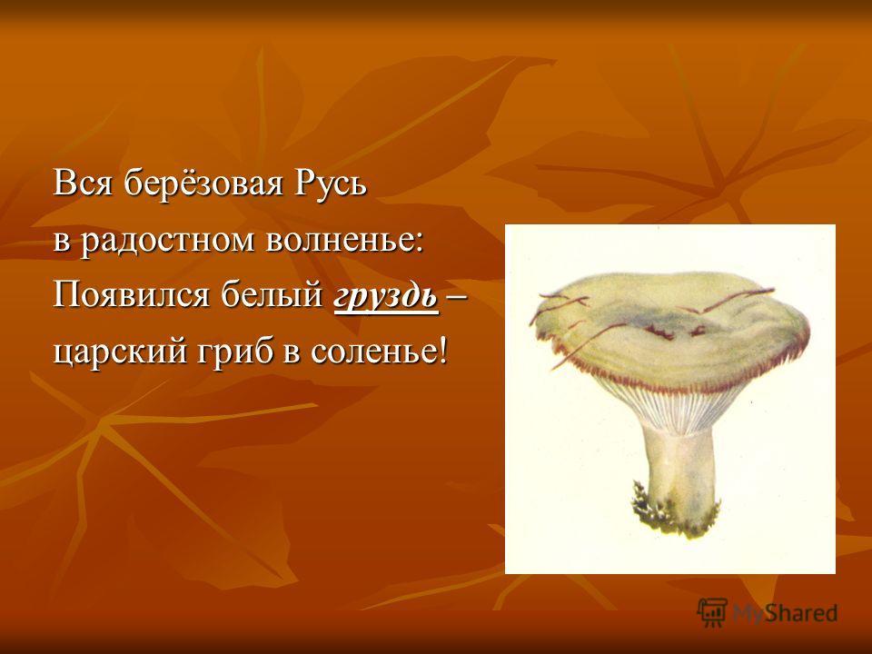 Вся берёзовая Русь в радостном волненье: Появился белый груздь – царский гриб в соленье!