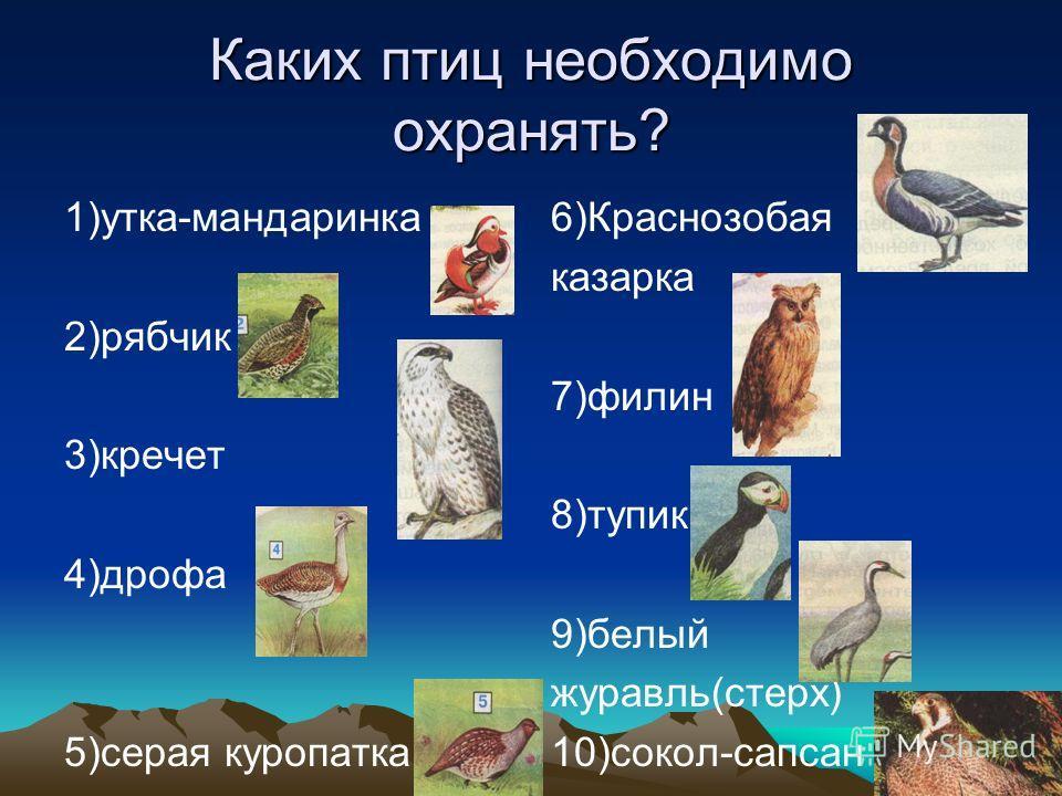 Каких птиц необходимо охранять? 1)утка-мандаринка 2)рябчик 3)кречет 4)дрофа 5)серая куропатка 6)Краснозобая казарка 7)филин 8)тупик 9)белый журавль(стерх) 10)сокол-сапсан