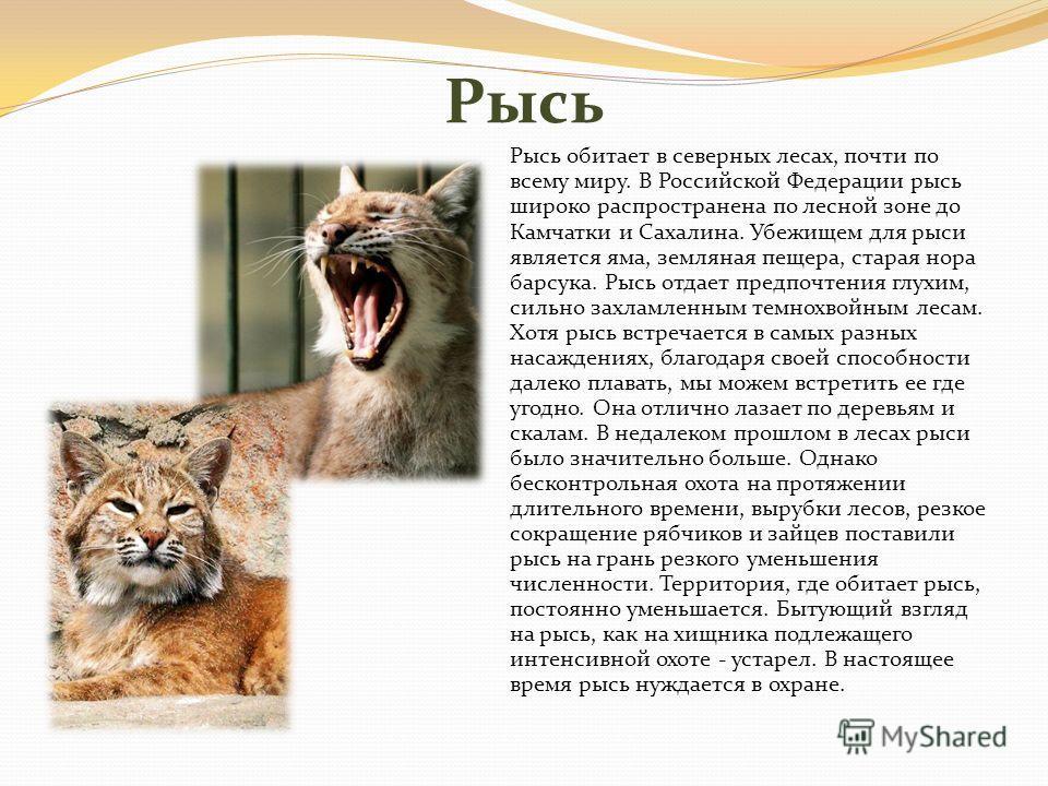 Рысь Рысь обитает в северных лесах, почти по всему миру. В Российской Федерации рысь широко распространена по лесной зоне до Камчатки и Сахалина. Убежищем для рыси является яма, земляная пещера, старая нора барсука. Рысь отдает предпочтения глухим, с