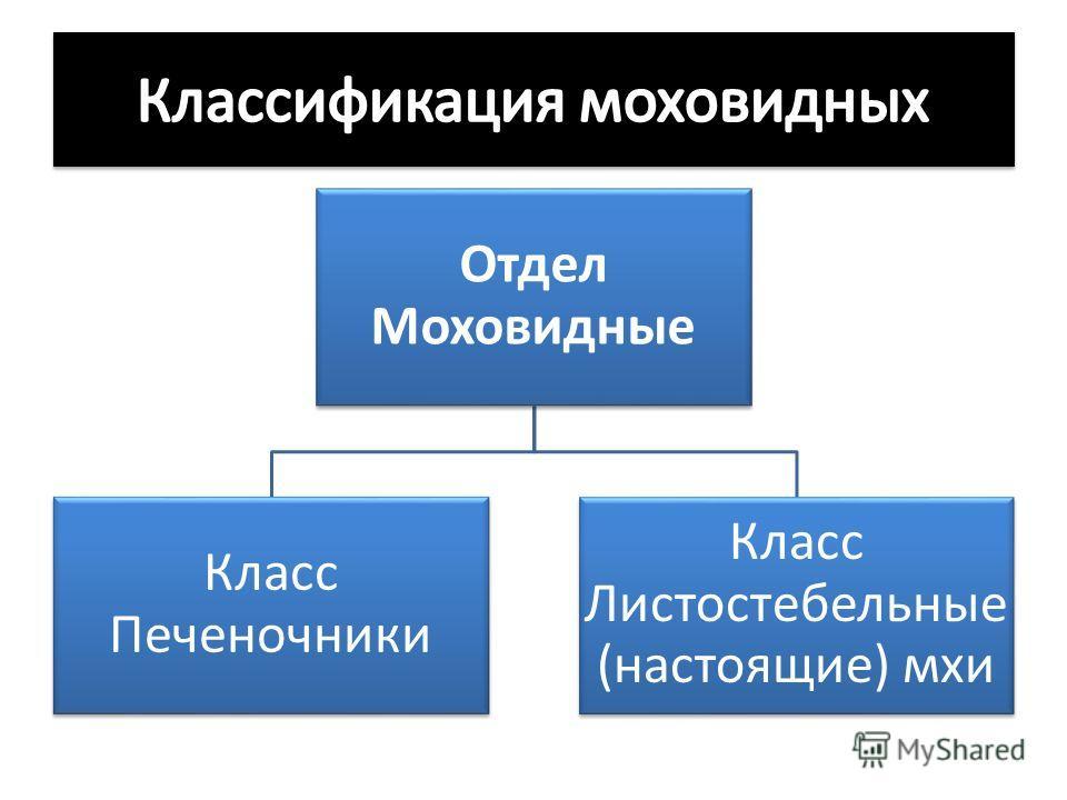 Отдел Моховидные Класс Печеночники Класс Листостебельные (настоящие) мхи