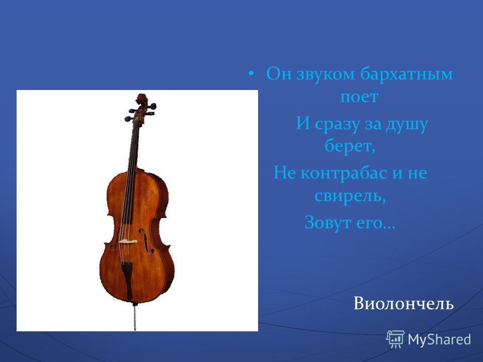 Он звуком бархатным поет И сразу за душу берет, Не контрабас и не свирель, Зовут его … Виолончель