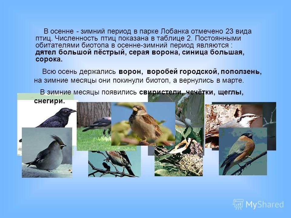 В осенне - зимний период в парке Лобанка отмечено 23 вида птиц. Численность птиц показана в таблице 2. Постоянными обитателями биотопа в осенне-зимний период являются : дятел большой пёстрый, серая ворона, синица большая, сорока. Всю осень держались