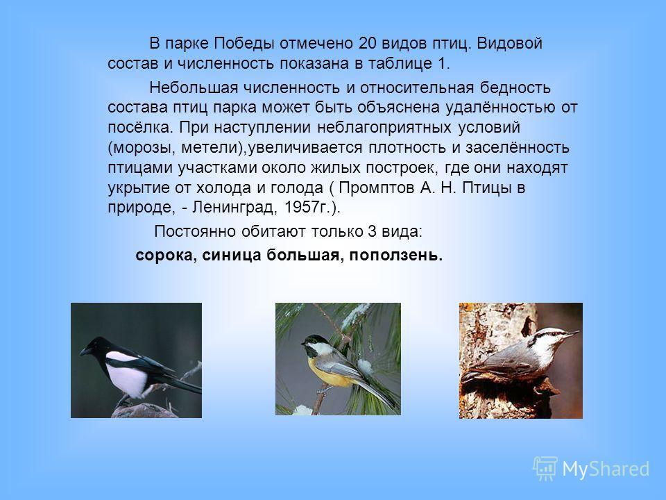 В парке Победы отмечено 20 видов птиц. Видовой состав и численность показана в таблице 1. Небольшая численность и относительная бедность состава птиц парка может быть объяснена удалённостью от посёлка. При наступлении неблагоприятных условий (морозы,