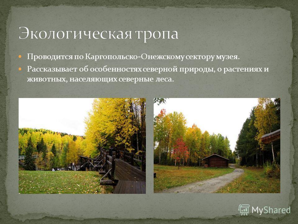 Проводится по Каргопольско-Онежскому сектору музея. Рассказывает об особенностях северной природы, о растениях и животных, населяющих северные леса.
