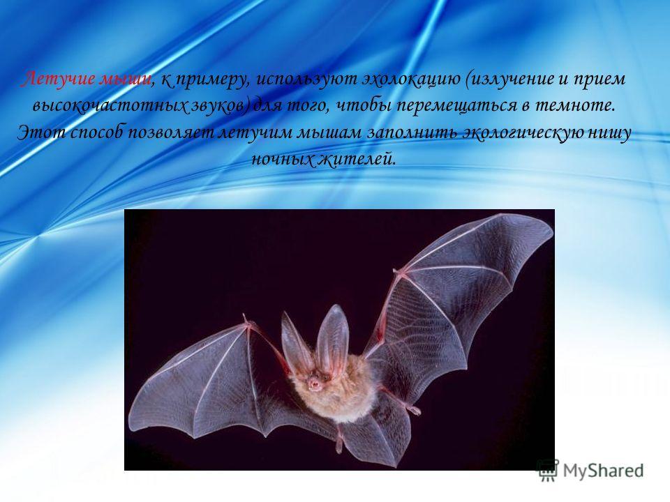 Летучие мыши, к примеру, используют эхолокацию (излучение и прием высокочастотных звуков) для того, чтобы перемещаться в темноте. Этот способ позволяет летучим мышам заполнить экологическую нишу ночных жителей.