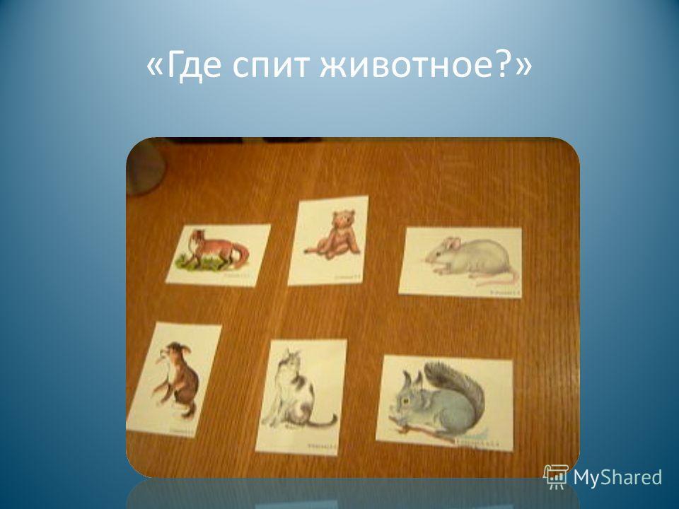 « Где спит животное ?»