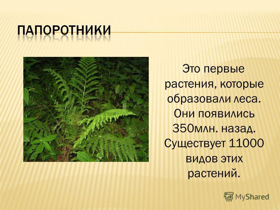 Это первые растения, которые образовали леса. Они появились 350млн. назад. Существует 11000 видов этих растений.