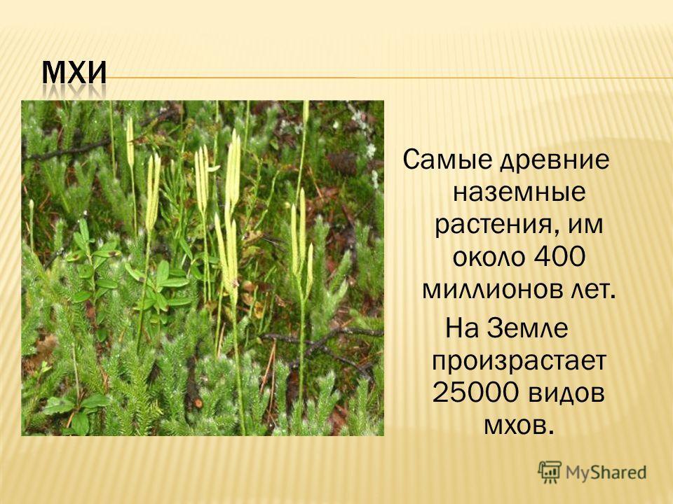 Самые древние наземные растения, им около 400 миллионов лет. На Земле произрастает 25000 видов мхов.