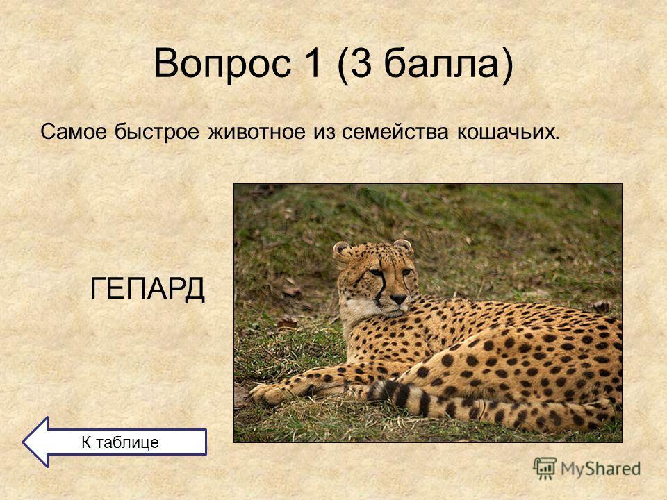 Вопрос 1 (3 балла) Самое быстрое животное из семейства кошачьих. ГЕПАРД К таблице