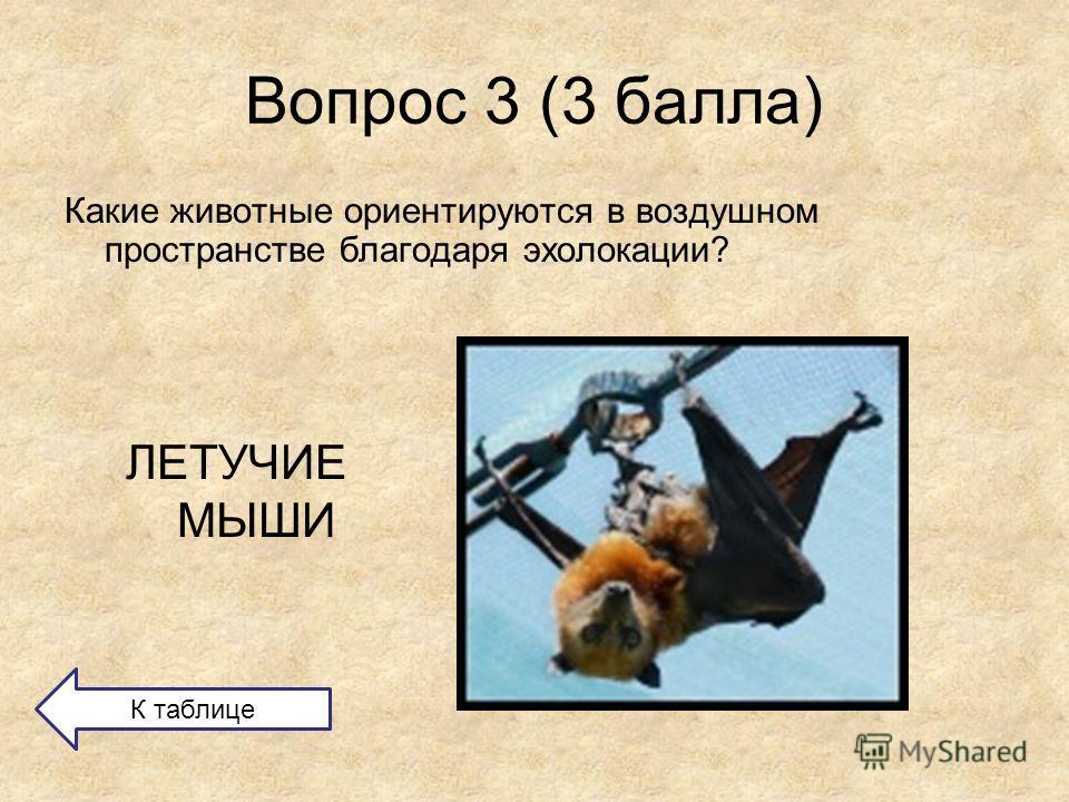 Вопрос 3 (3 балла) Какие животные ориентируются в воздушном пространстве благодаря эхолокации? ЛЕТУЧИЕ МЫШИ К таблице