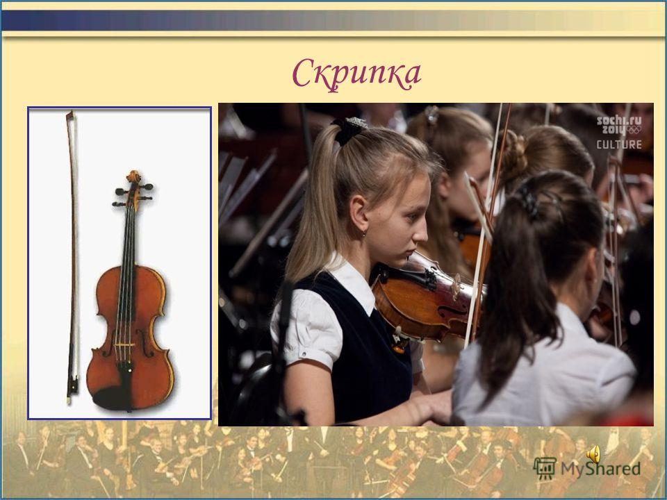 Группа струнных инструментов СкрипкаАльтВиолончельКонтрабас