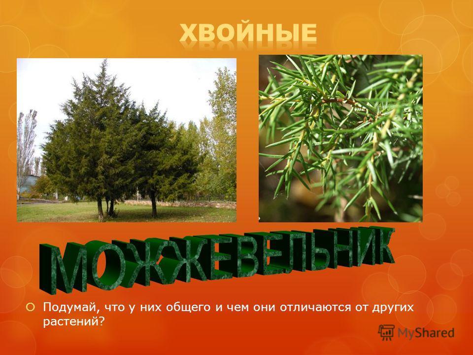 Подумай, что у них общего и чем они отличаются от других растений?