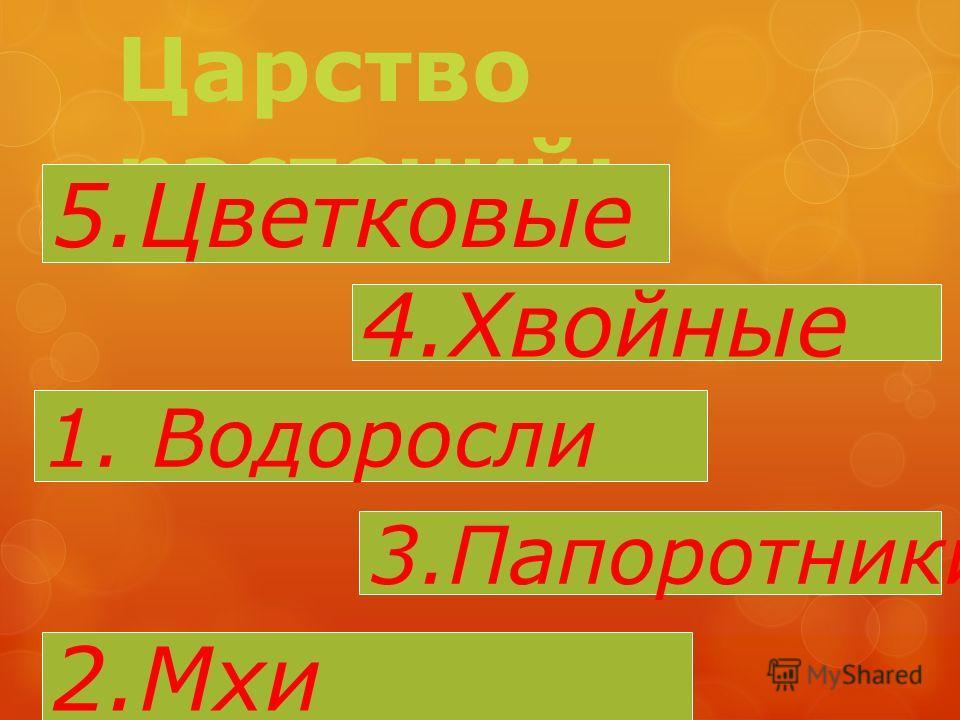 Царство растений: 5.Цветковые 4.Хвойные 1. Водоросли 3.Папоротники 2.Мхи
