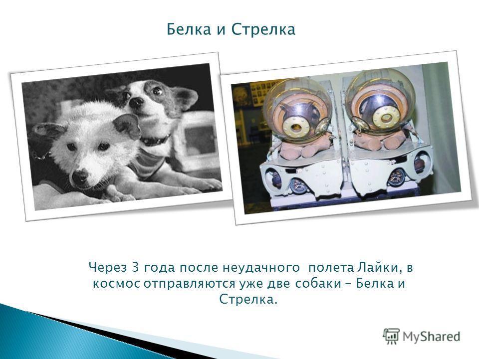 Через 3 года после неудачного полета Лайки, в космос отправляются уже две собаки – Белка и Стрелка. Белка и Стрелка