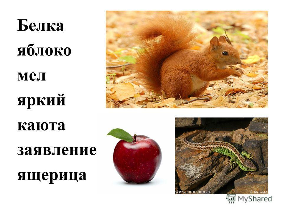 Белка яблоко мел яркий каюта заявление ящерица