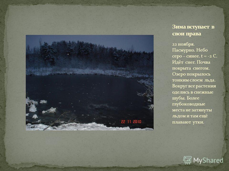 22 ноября. Пасмурно. Небо серо – синее. t = -2 С. Идёт снег. Почва покрыта снегом. Озеро покрылось тонким слоем льда. Вокруг все растения оделись в снежные шубы. Более глубоководные места не затянуты льдом и там ещё плавают утки.