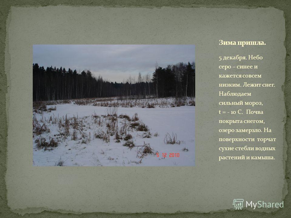 5 декабря. Небо серо – синее и кажется совсем низким. Лежит снег. Наблюдаем сильный мороз, t = - 10 С. Почва покрыта снегом, озеро замерзло. На поверхности торчат сухие стебли водных растений и камыша.