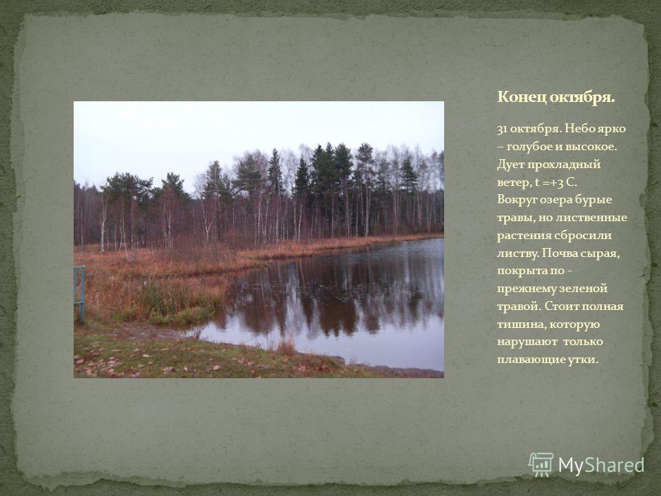 31 октября. Небо ярко – голубое и высокое. Дует прохладный ветер, t =+3 С. Вокруг озера бурые травы, но лиственные растения сбросили листву. Почва сырая, покрыта по - прежнему зеленой травой. Стоит полная тишина, которую нарушают только плавающие утк