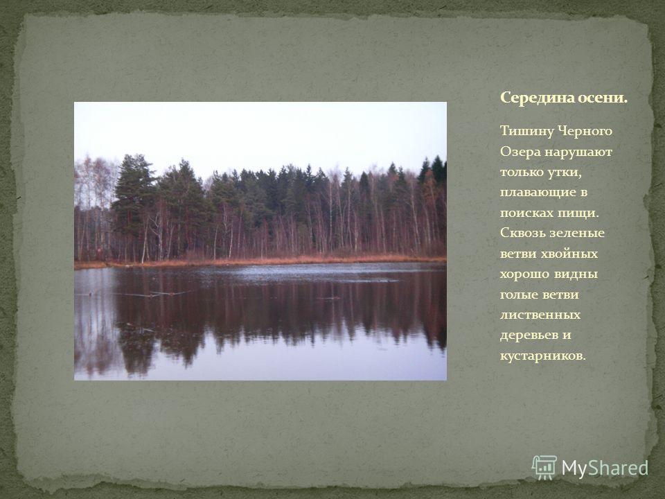 Тишину Черного Озера нарушают только утки, плавающие в поисках пищи. Сквозь зеленые ветви хвойных хорошо видны голые ветви лиственных деревьев и кустарников.