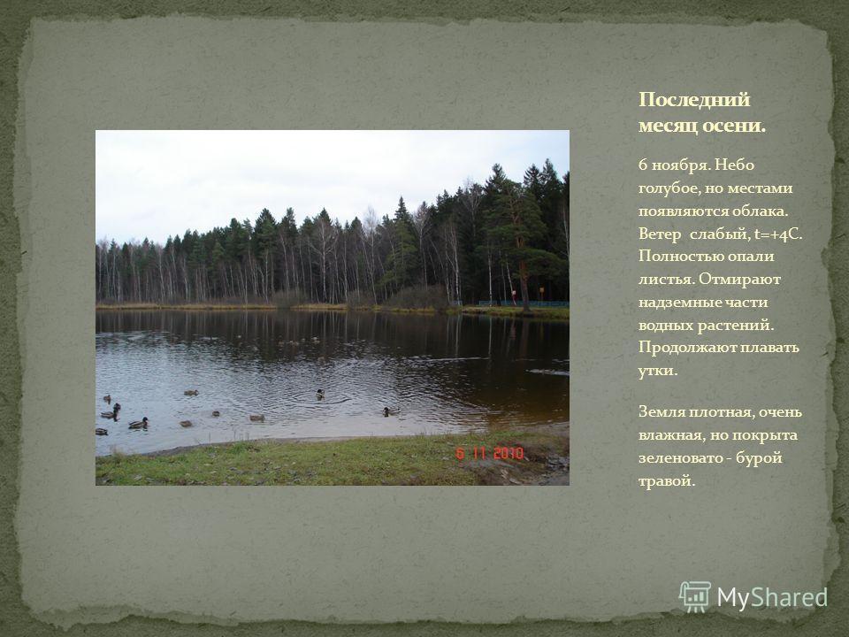 6 ноября. Небо голубое, но местами появляются облака. Ветер слабый, t=+4С. Полностью опали листья. Отмирают надземные части водных растений. Продолжают плавать утки. Земля плотная, очень влажная, но покрыта зеленовато - бурой травой.