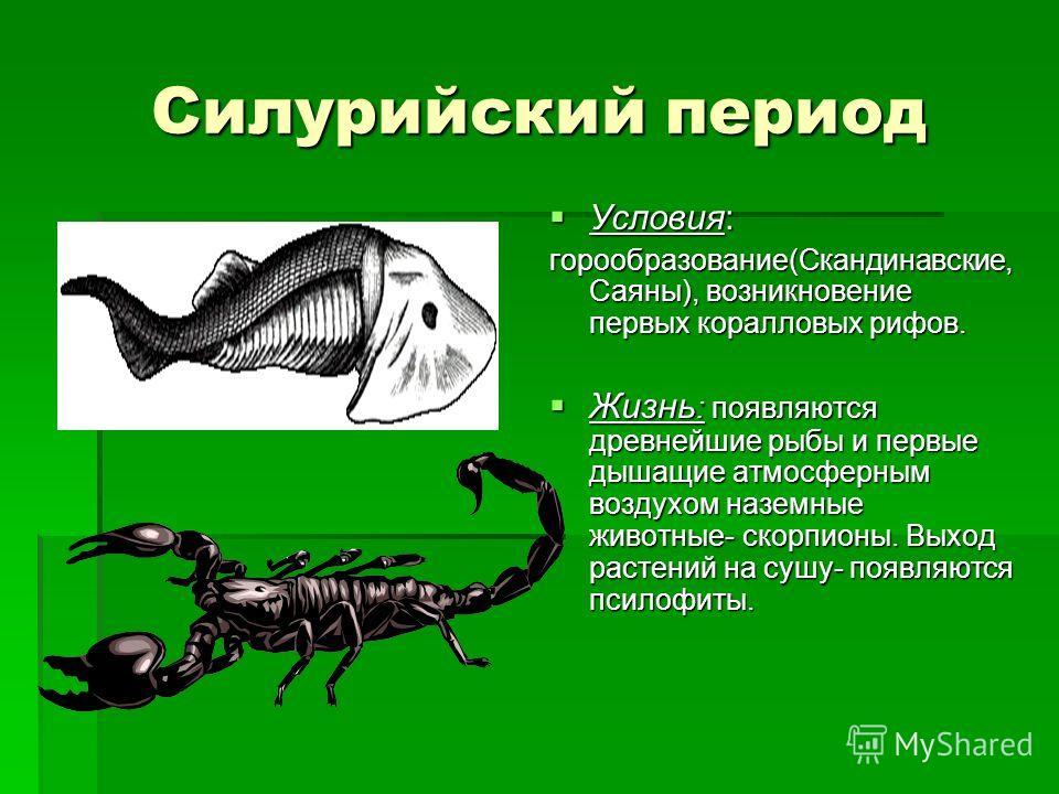 Силурийский период Условия: Условия: горообразование(Скандинавские, Саяны), возникновение первых коралловых рифов. Жизнь : появляются древнейшие рыбы и первые дышащие атмосферным воздухом наземные животные- скорпионы. Выход растений на сушу- появляют