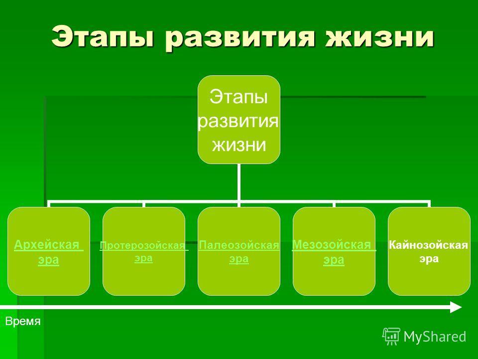 Этапы развития жизни Этапы развития жизни Архейская эра Протерозойская эра Палеозойская эра Мезозойская эра Кайнозойская эра Время