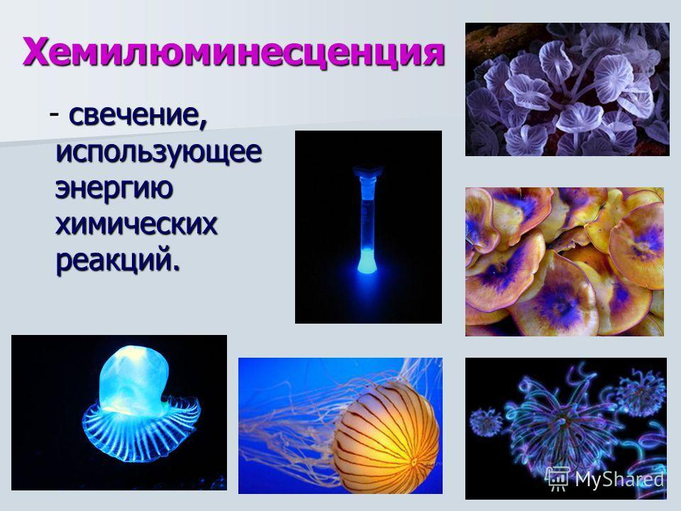 Хемилюминесценция - свечение, использующее энергию химических реакций. - свечение, использующее энергию химических реакций.