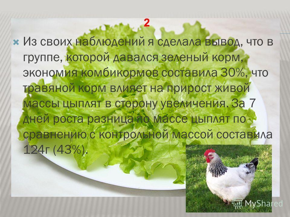 Из своих наблюдений я сделала вывод, что в группе, которой давался зеленый корм, экономия комбикормов составила 30%, что травяной корм влияет на прирост живой массы цыплят в сторону увеличения. За 7 дней роста разница по массе цыплят по сравнению с к