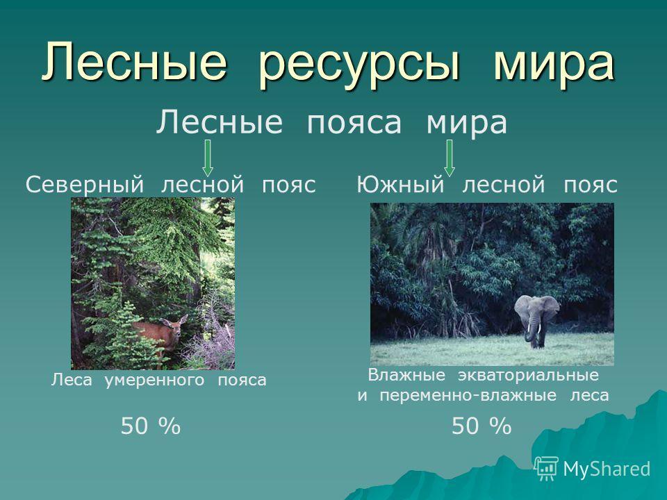 Лесные ресурсы мира Лесные пояса мира Северный лесной поясЮжный лесной пояс Леса умеренного пояса Влажные экваториальные и переменно-влажные леса 50 %