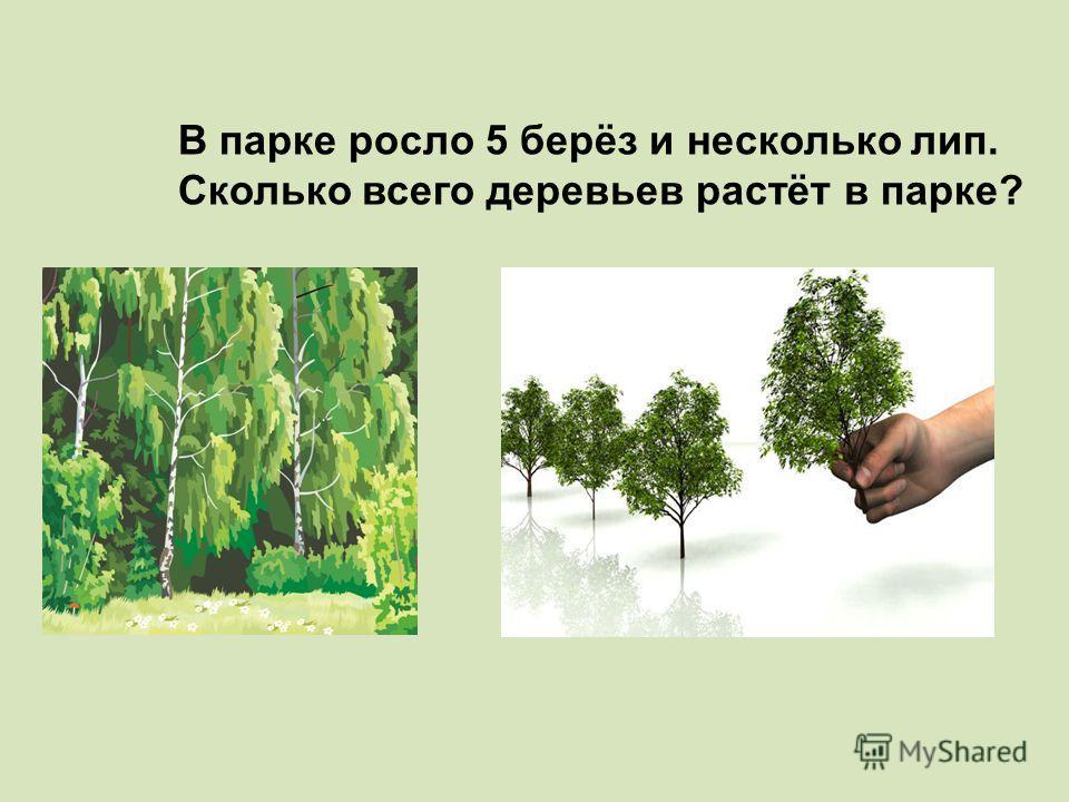 В парке росло 5 берёз и несколько лип. Сколько всего деревьев растёт в парке?