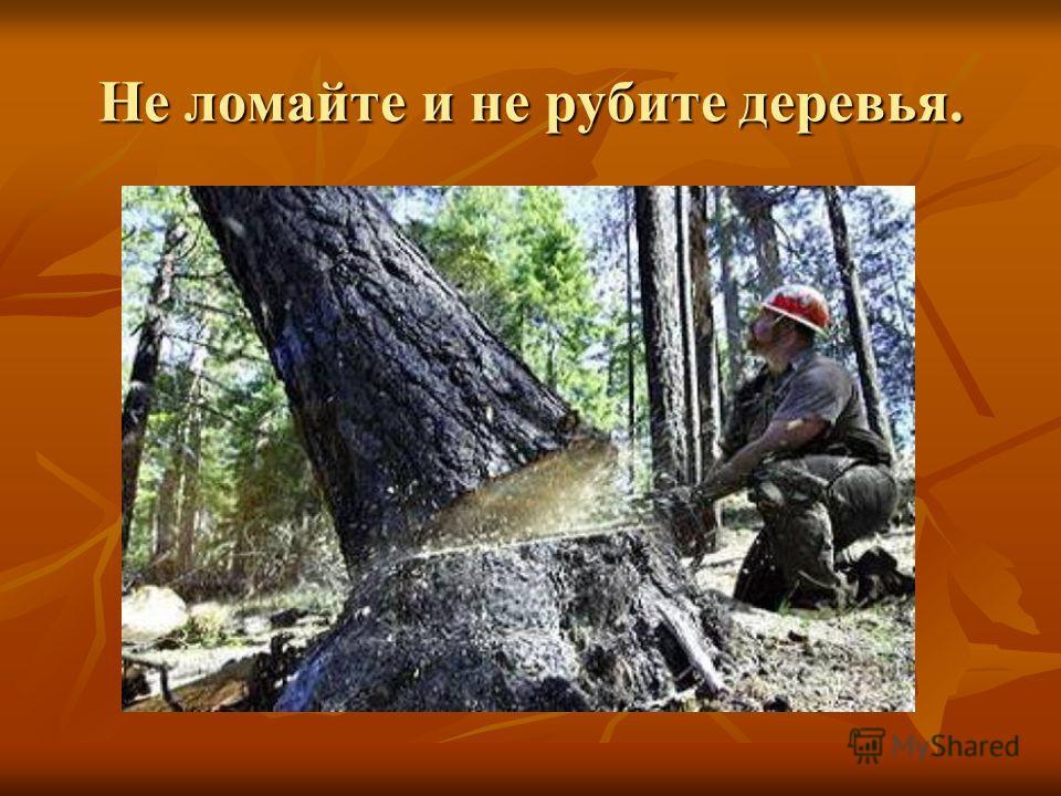 Не ломайте и не рубите деревья.