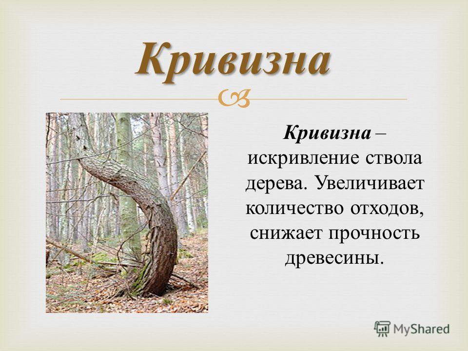 Кривизна Кривизна – искривление ствола дерева. Увеличивает количество отходов, снижает прочность древесины.